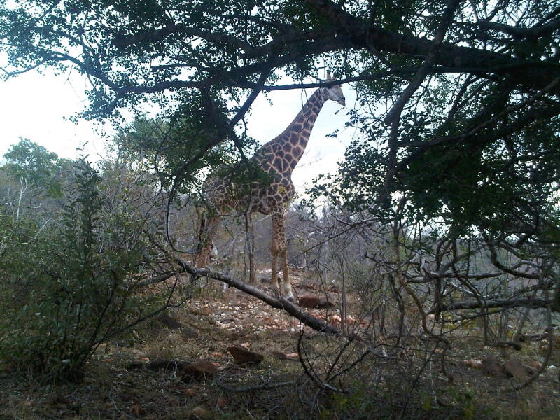 Big Five Animals - View from the Olifants River Bush Hideaway